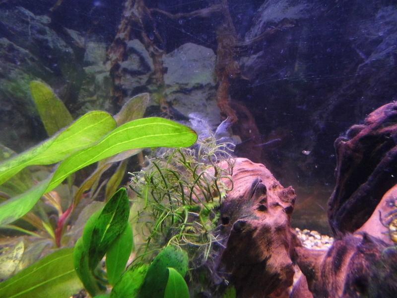Algues fantôme... Dsci0018