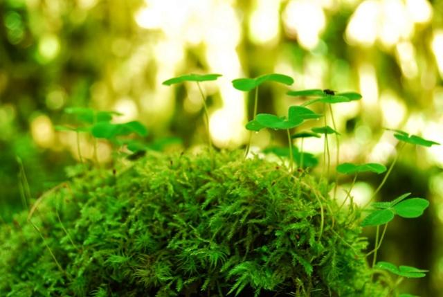 On peux absorber l'énergie des personnes comme des plantes 1be32810