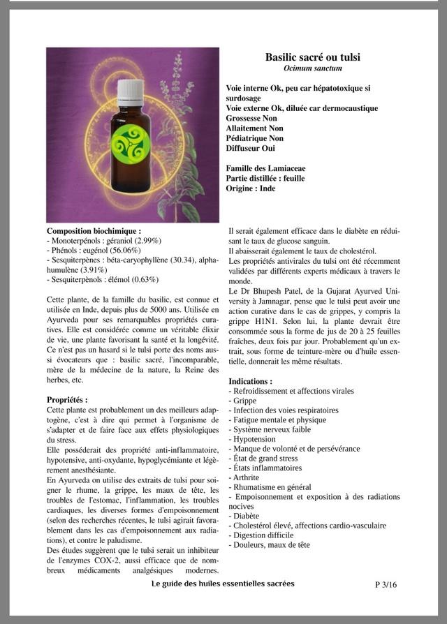 Le Tulsi ( Basilic Sacré)  2db77610