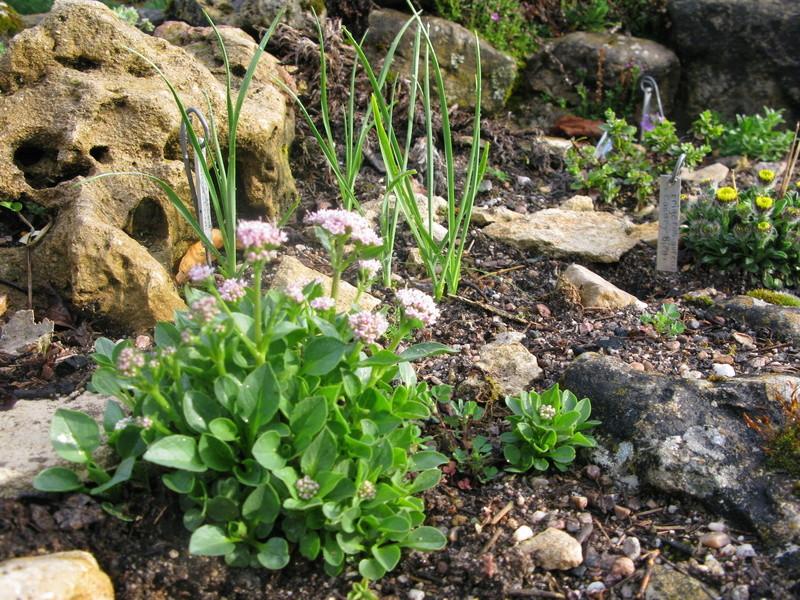 petit aperçu de mes rocailles - Page 5 Img_0035