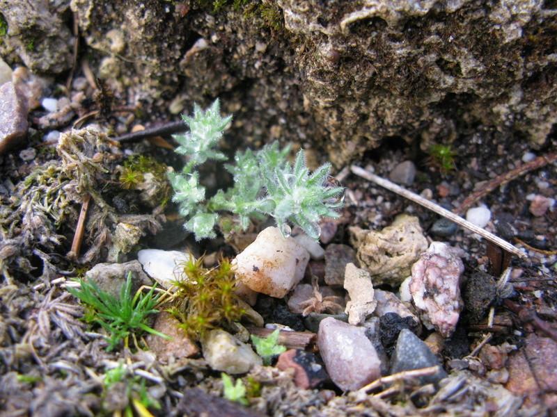 petit aperçu de mes rocailles - Page 5 Img_0038