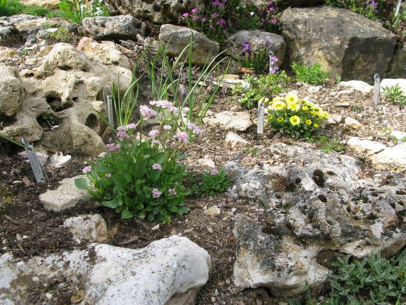 petit aperçu de mes rocailles - Page 5 Img_0042