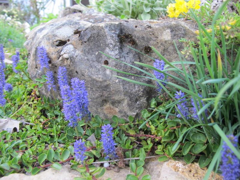 petit aperçu de mes rocailles - Page 5 Img_8417