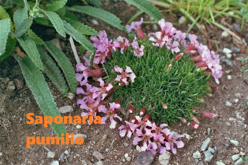 photos de plantes rares Imm01010