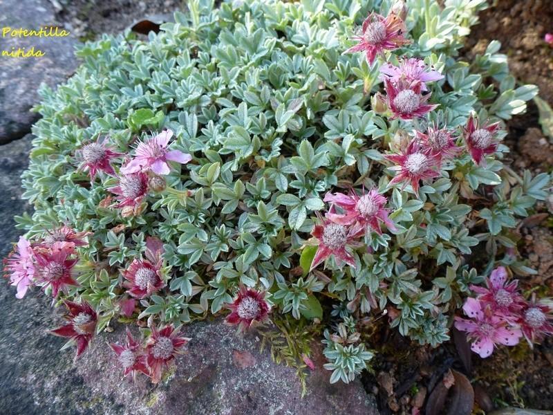 photos de plantes rares P1000610