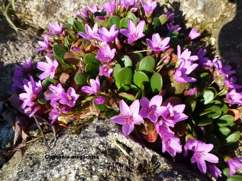 photos de plantes rares P1030410