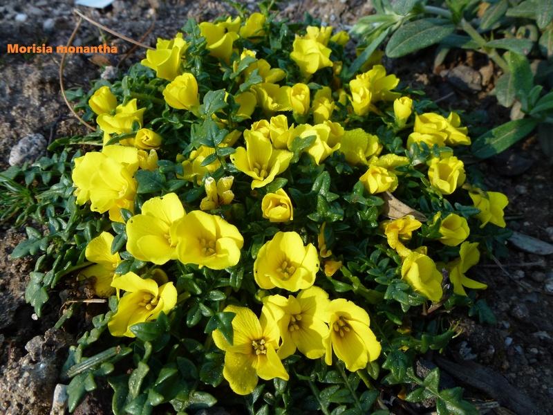 photos de plantes rares P1030411
