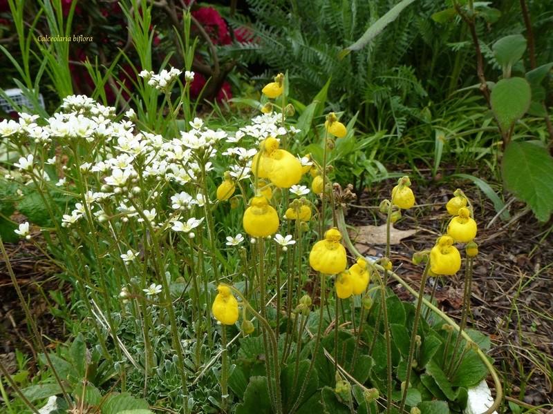 photos de plantes rares P1030610