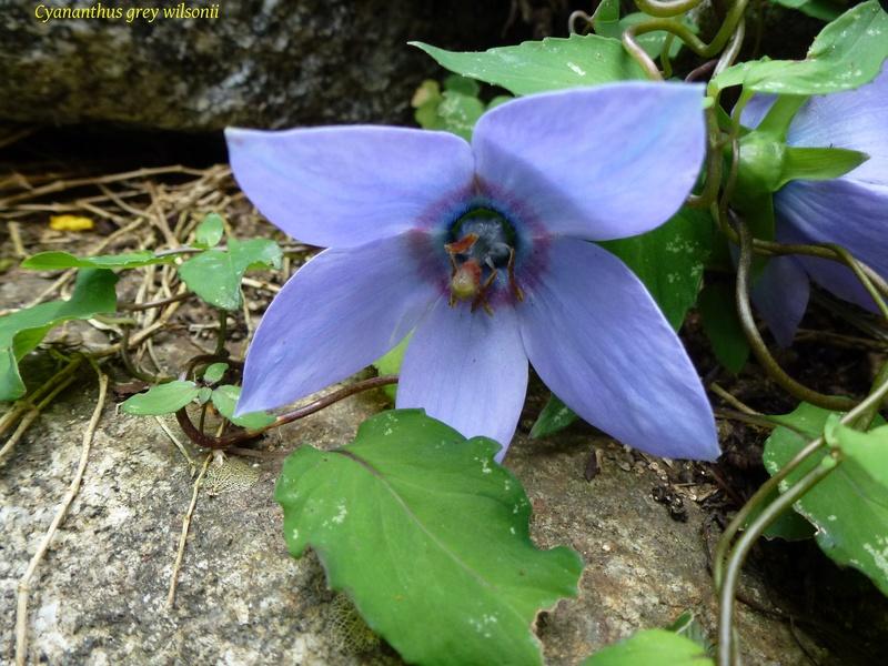 photos de plantes rares P1030910