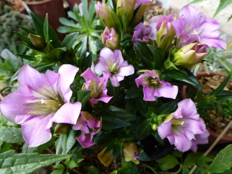 photos de plantes rares P1030911