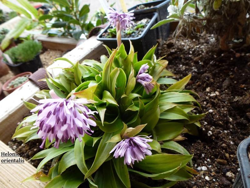 photos de plantes rares P1040110