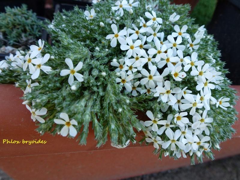 photos de plantes rares P1040210