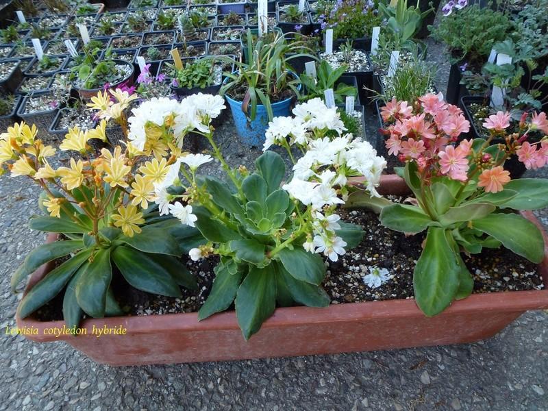 photos de plantes rares P1040310
