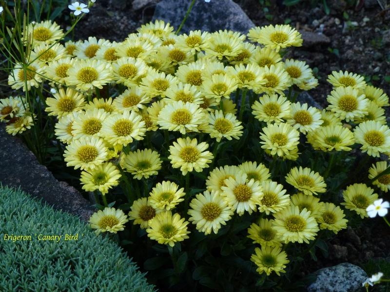 photos de plantes rares P1040311