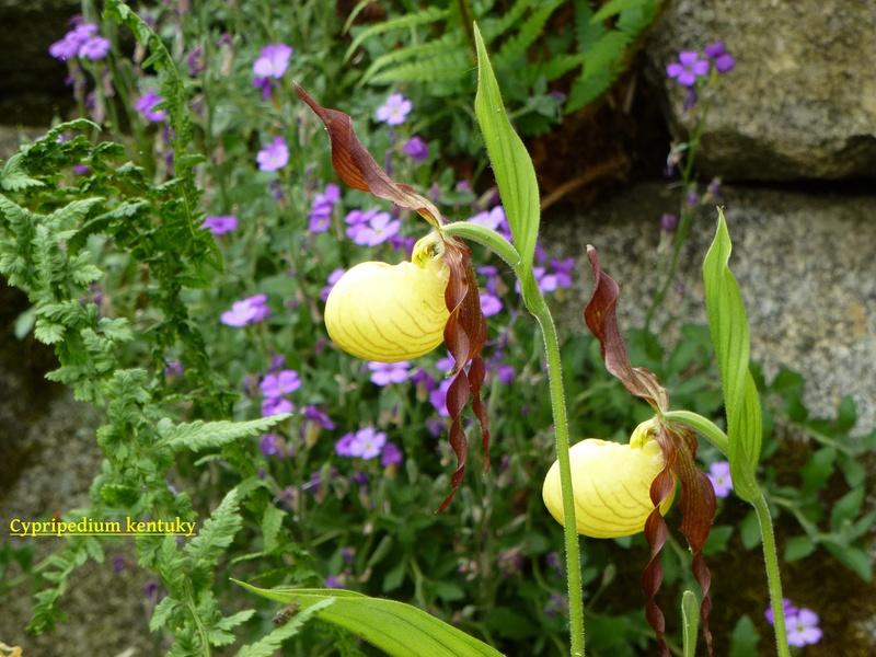 photos de plantes rares P1040412