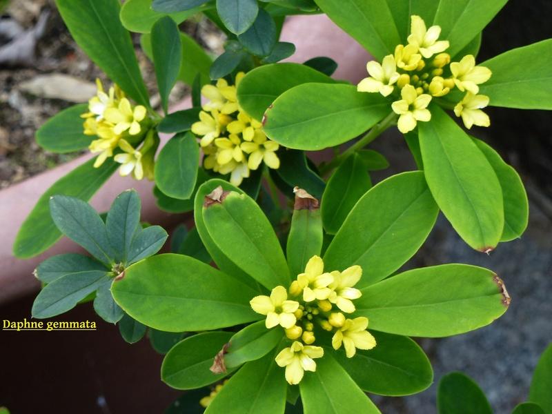 photos de plantes rares P1040513