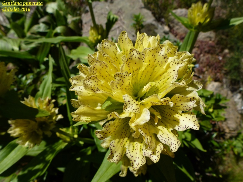 photos de plantes rares P1040612