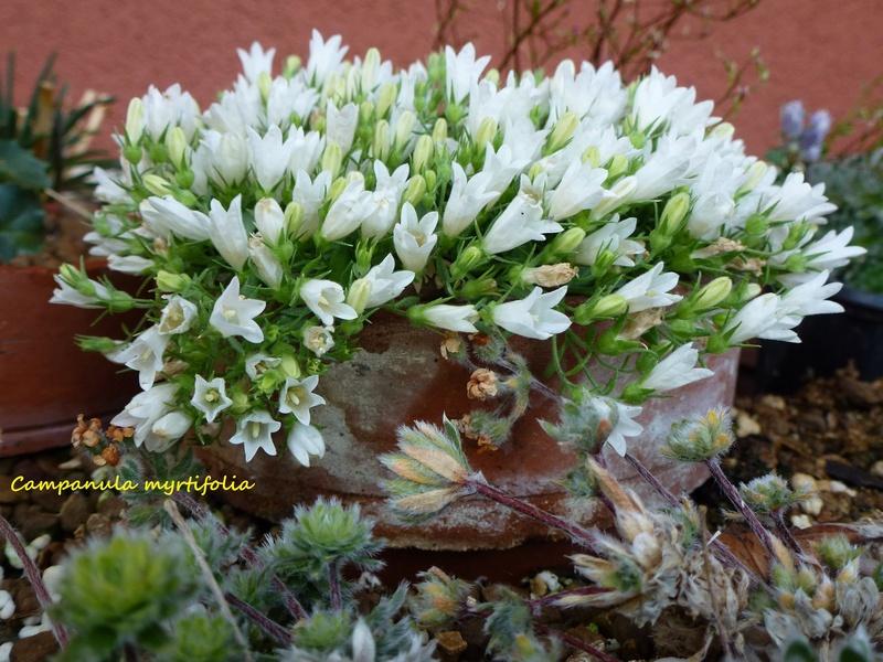photos de plantes rares P1040613