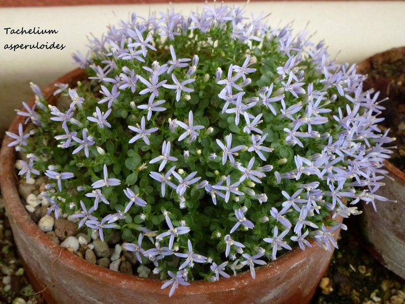 photos de plantes rares P1040614