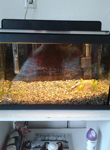 Luminosité aquarium 27292810