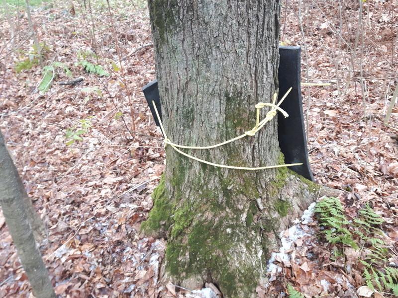 Proteger les pieds des arbres 20171111