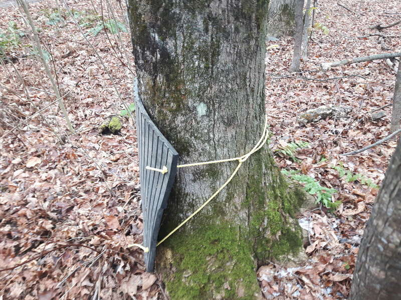 Proteger les pieds des arbres 20171112