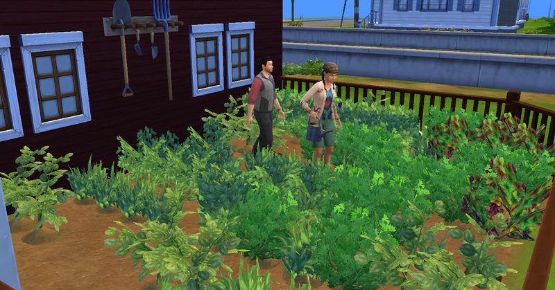 [Challenge Jardin-Ecolo-Sims] Les Laterre ! 30-12-17