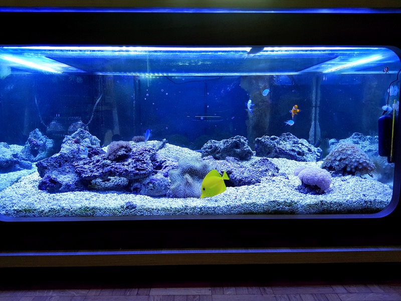 Mon aquarium de Toulouse. 360L Table basse - Page 3 20171013