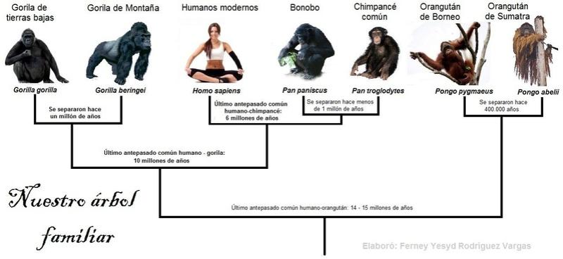 Genética de poblaciones humanas. Árboles filogenéticos Arbol10