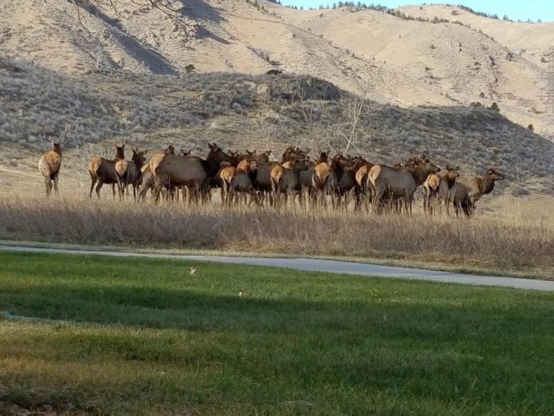 Wait Until You've Herd This Mule_d10
