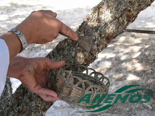 Découverte de la lutherie et fabrication d'une viole de gambe... - Page 19 Mastic10