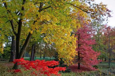 Idée promenade : le Parc du Domaine de Courson ! Parc_c10
