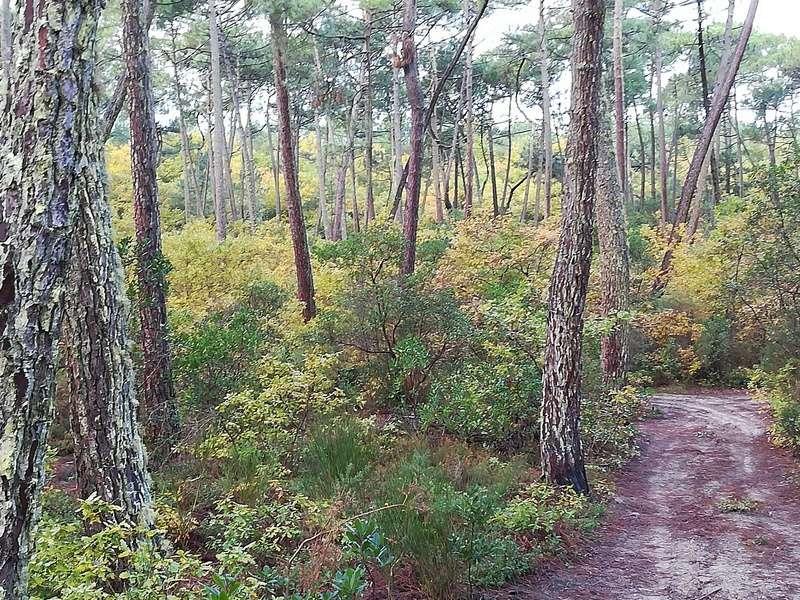 Concours couleurs d'automne 11-11-10