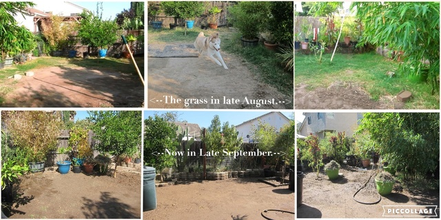 Leo's first garden - Page 4 Collag10