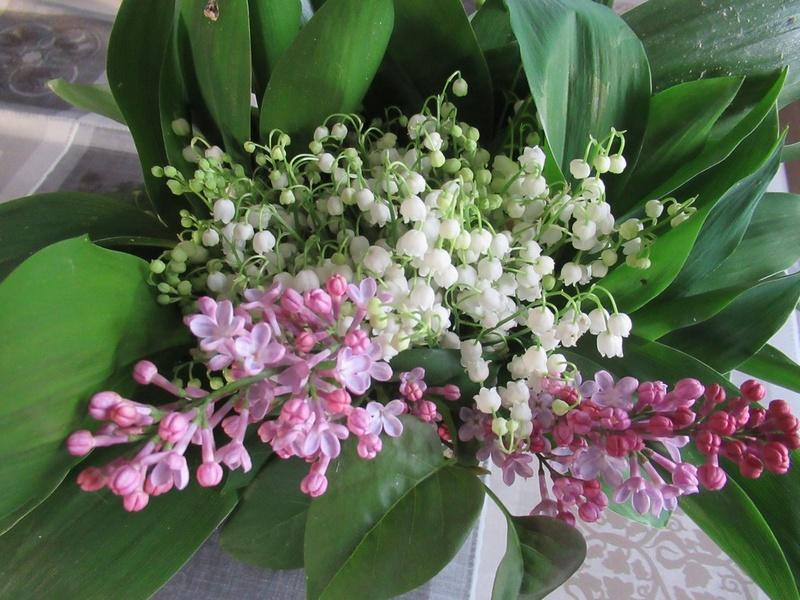 MAI : Rosée en avril et mai, rend août et septembre gai Img_1810