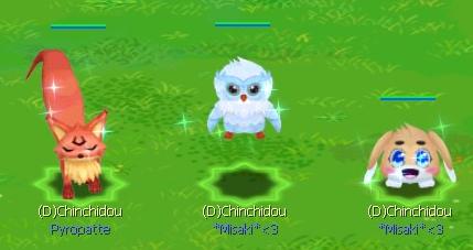 Candidature de Chinchidou ! Pet10