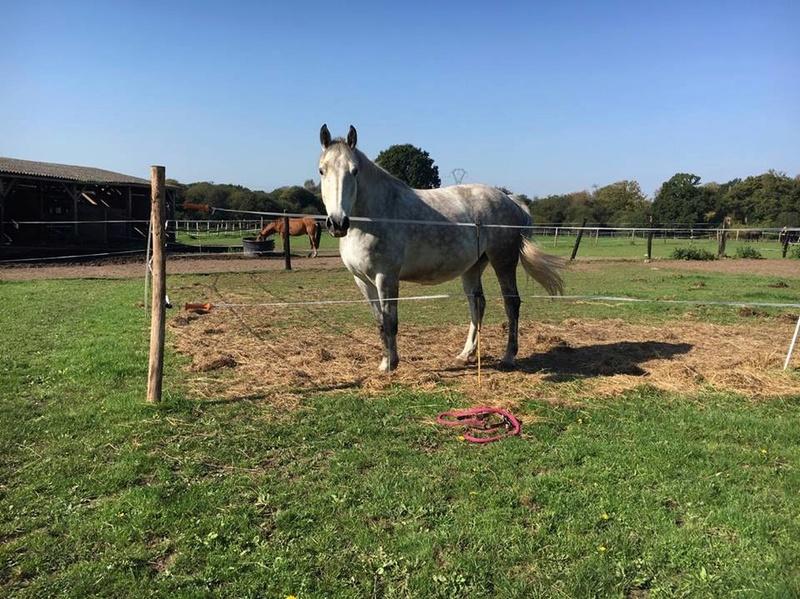 (Dpt 63)  CALYPSO, ONC, Adoptée par le centre equestre de pluvigner (Août 2014) - Page 12 23666710
