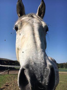 (Dpt 63)  CALYPSO, ONC, Adoptée par le centre equestre de pluvigner (Août 2014) - Page 12 23718010