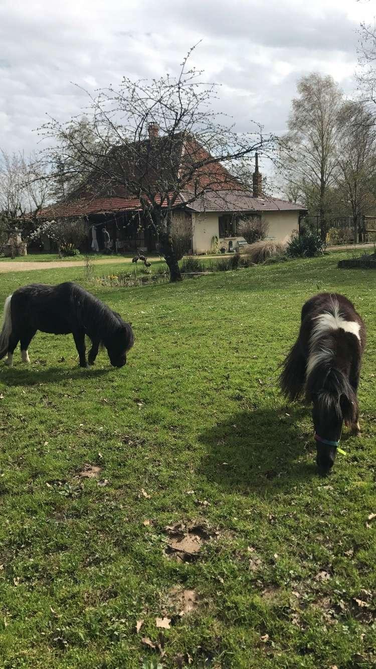 (dept 71) 2 ans - GRIOTTE - onc poney - jument -Réservée par Victoire B (mars 2018) Image213