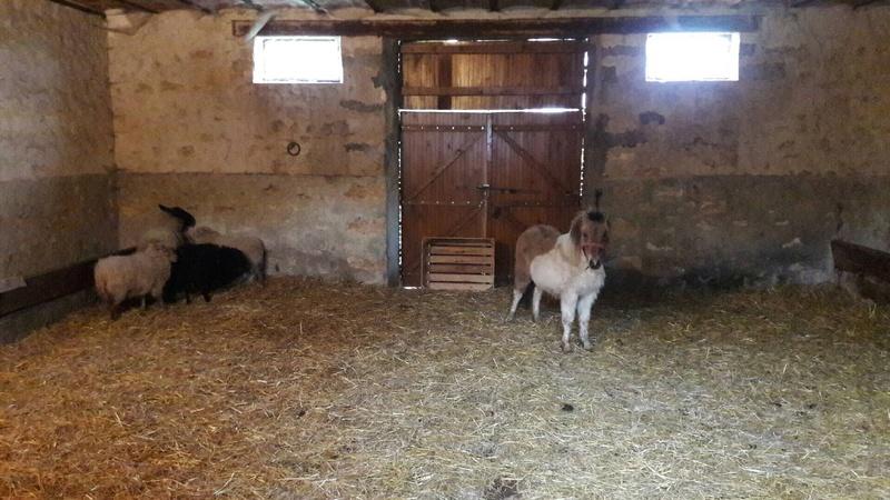 (dept 71) - 11 mois - HAVANNE - onc poney - jument - Nathalie R. (mars 2018) Img_0131
