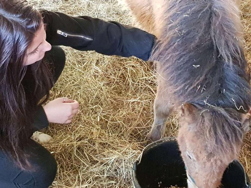 (dept 71) GAMIN & HERMINE - onc poney - sauvés par Céline (avril 2018) Img_0142