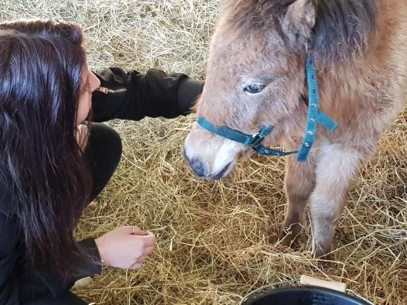 (dept 71) GAMIN & HERMINE - onc poney - sauvés par Céline (avril 2018) Img_0144