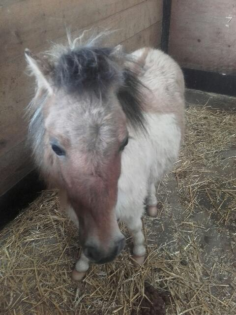 (dept 71) - 11 mois - HAVANNE - onc poney - jument - Nathalie R. (mars 2018) Img_0310