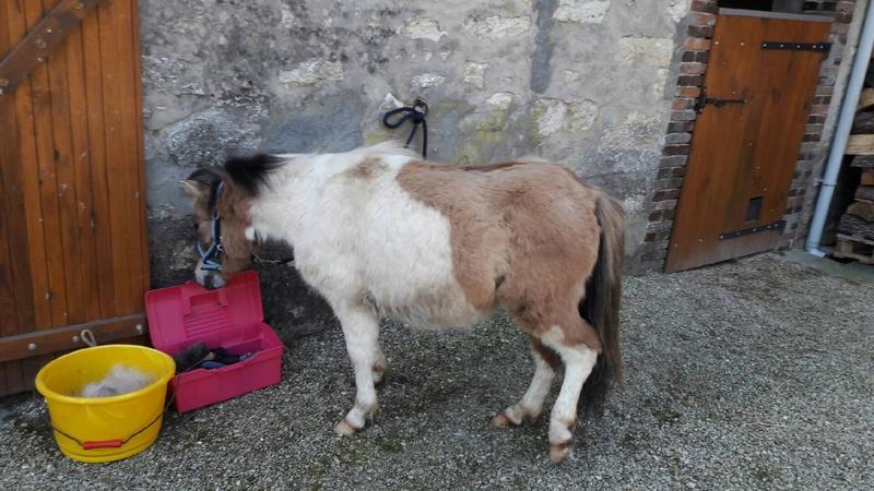 (dept 71) - 11 mois - HAVANNE - onc poney - jument - Nathalie R. (mars 2018) Img_0311