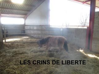 (dept 71) GAMIN & HERMINE - onc poney - sauvés par Céline (avril 2018) Img_1030