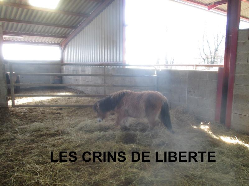 (dept 71) GAMIN & HERMINE - onc poney - sauvés par Céline (avril 2018) Img_1031