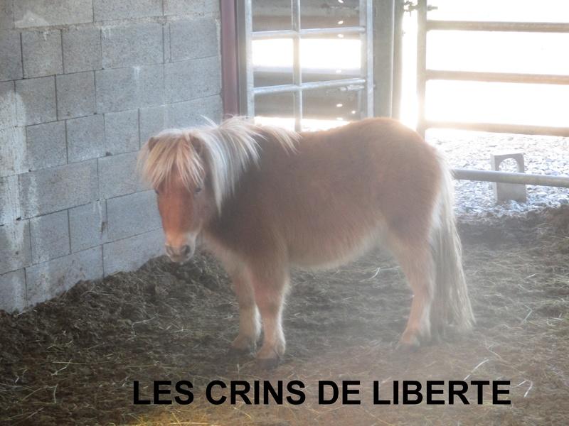 (dept 71) GAMIN & HERMINE - onc poney - sauvés par Céline (avril 2018) Img_1033