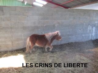 (dept 71) GAMIN & HERMINE - onc poney - sauvés par Céline (avril 2018) Img_1034