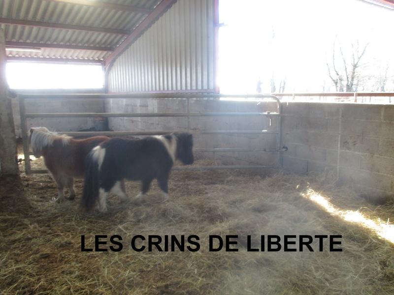 (dept 71) 2 ans - GRIOTTE - onc poney - jument -Réservée par Victoire B (mars 2018) Img_1040