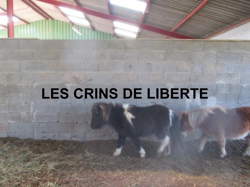 (dept 71) 2 ans - GRIOTTE - onc poney - jument -Réservée par Victoire B (mars 2018) Img_1041